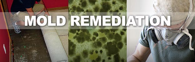 Mold Remediation in South Florida