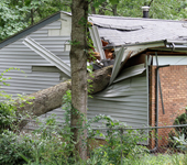 a house with a large tree trunk smashed through the ceiling and walls